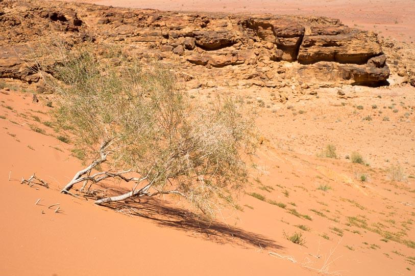 wadi-rum-desert-12