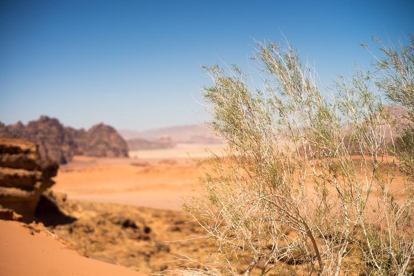 wadi-rum-desert-16