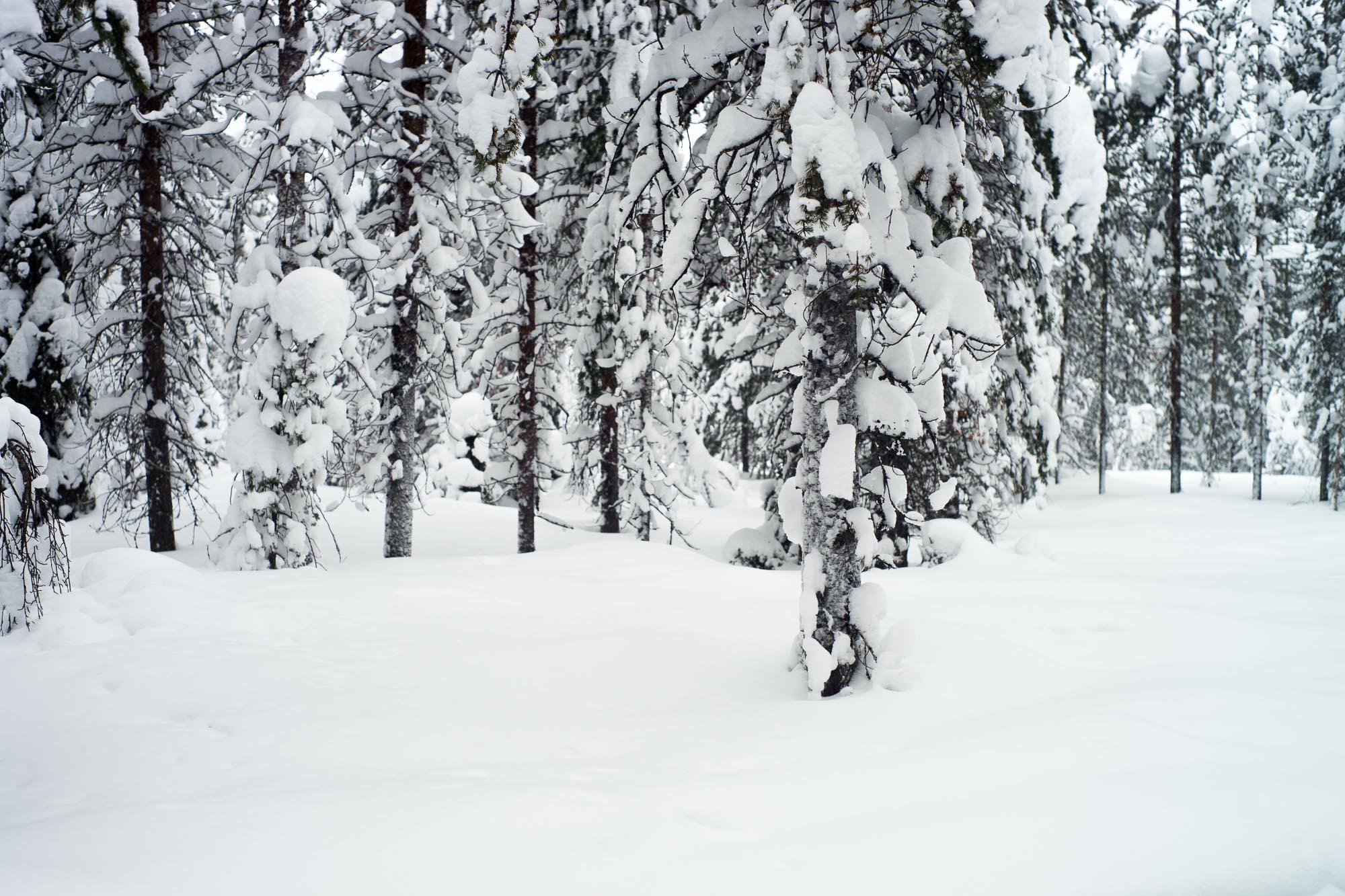 laponie-finlandaise-45